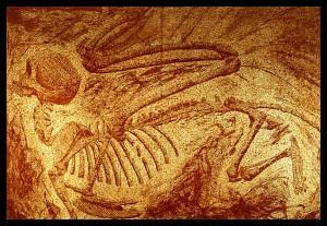 Sphinx_Fossil_by_RachelHWhite